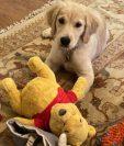 El secretario de Estado de EE.UU. Mike Pompeo tuiteó una foto de su perro Mercer.