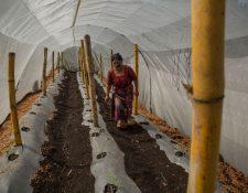 Irma Chonay revisa la plantación de un huerto comunitario en San Pedro Yepocapa. (Foto, Prensa Libre: Efe).