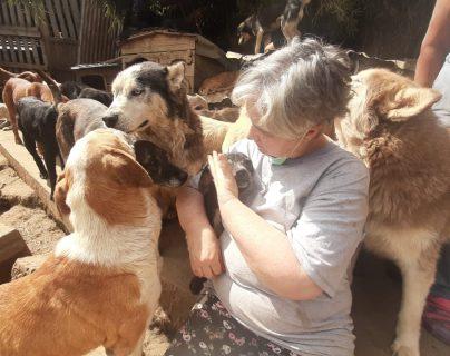 El Refugio Vida Animal, ubicado en la ruta a San Juan Sacatepéquez, ha rescatado a cientos de perros. (Foto Prensa Libre: Andrea Domínguez)