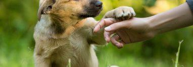 Los perros mestizos son nobles, cariñosos y protectores y padecen menos enfermedades. (Foto, servicios)
