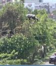 Daniel Rosales reconstruye su casa del árbol en la Roosevelt