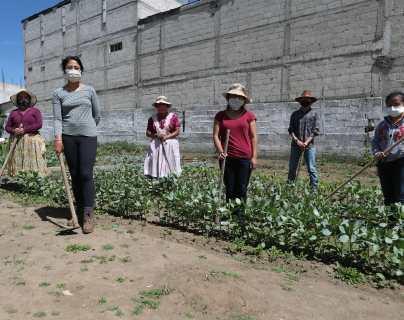 Cómo un proyecto de huertos de amaranto y haba busca combatir la desnutrición en Quetzaltenango