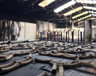 Gimnasio de saltadores olímpicos mexicanos es consumido por incendio
