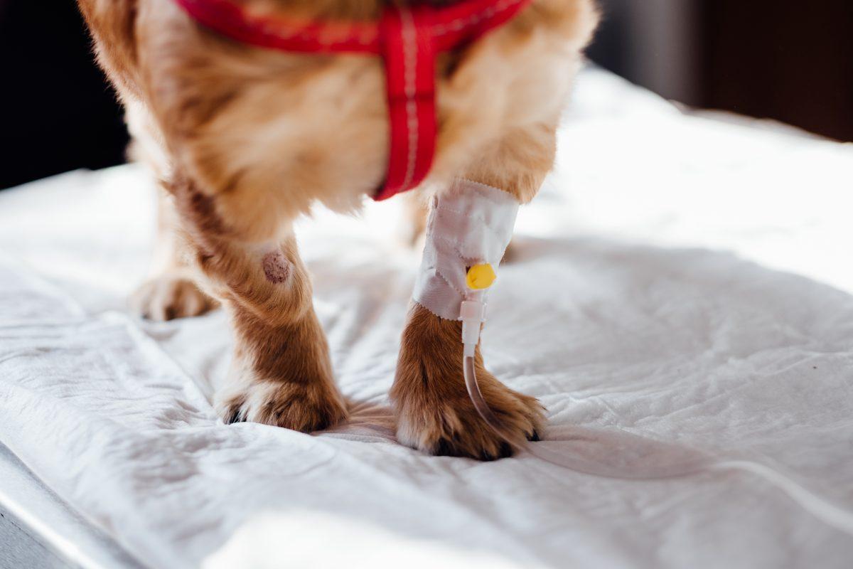 Primeros auxilios: qué hacer en las emergencias más frecuentes con las mascotas