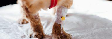 Los accidentes en casa con las mascotas podrían suceder en cualquier momento y es preciso estar listos para saber qué hacer.  (Foto Prensa Libre:  freestocks.org en Pexels).