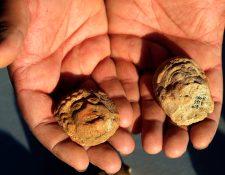 Arqueólogos israelíes han desenterrado un yacimiento en Jerusalén vinculado con el bíblico reino de Judá. (Foto Prensa Libre: AFP)