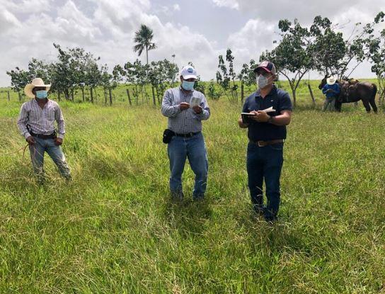 Representantes del sector agropecuario Centroamericano conocieron la situación y combate de los brotes de langosta en Guatemala por parte de Oirsa. (Foto Prensa Libre: Hemeroteca)