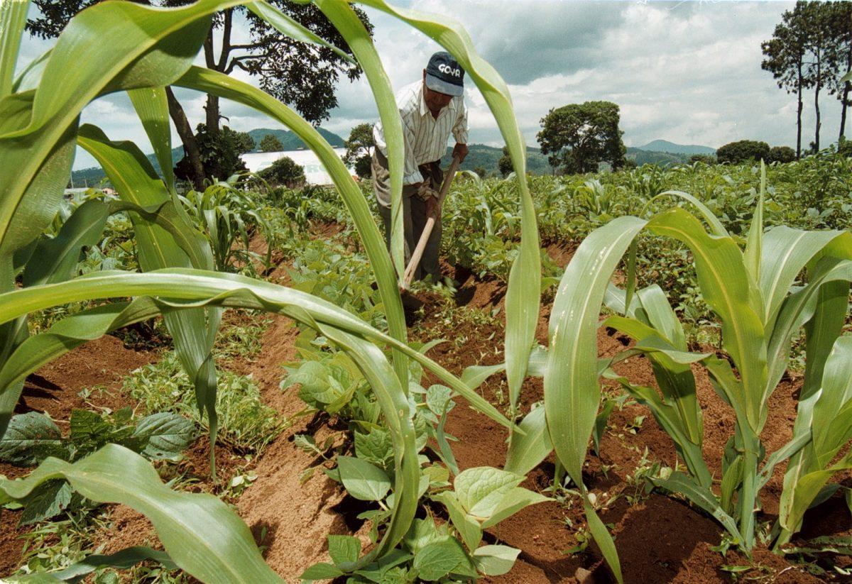 Alza en precio de granos básicos agudiza la crisis alimentaria en el país