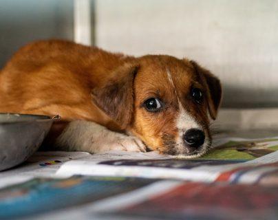Los animales también están expuestos a problemas de alergia.  (Foto Prensa Libre: Vijeshwar Datt/Unsplash).