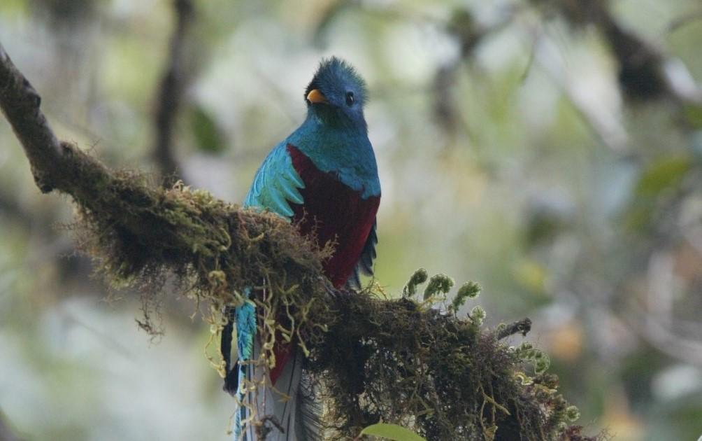 Guatemala: Tierra de árboles, del jade y el quetzal