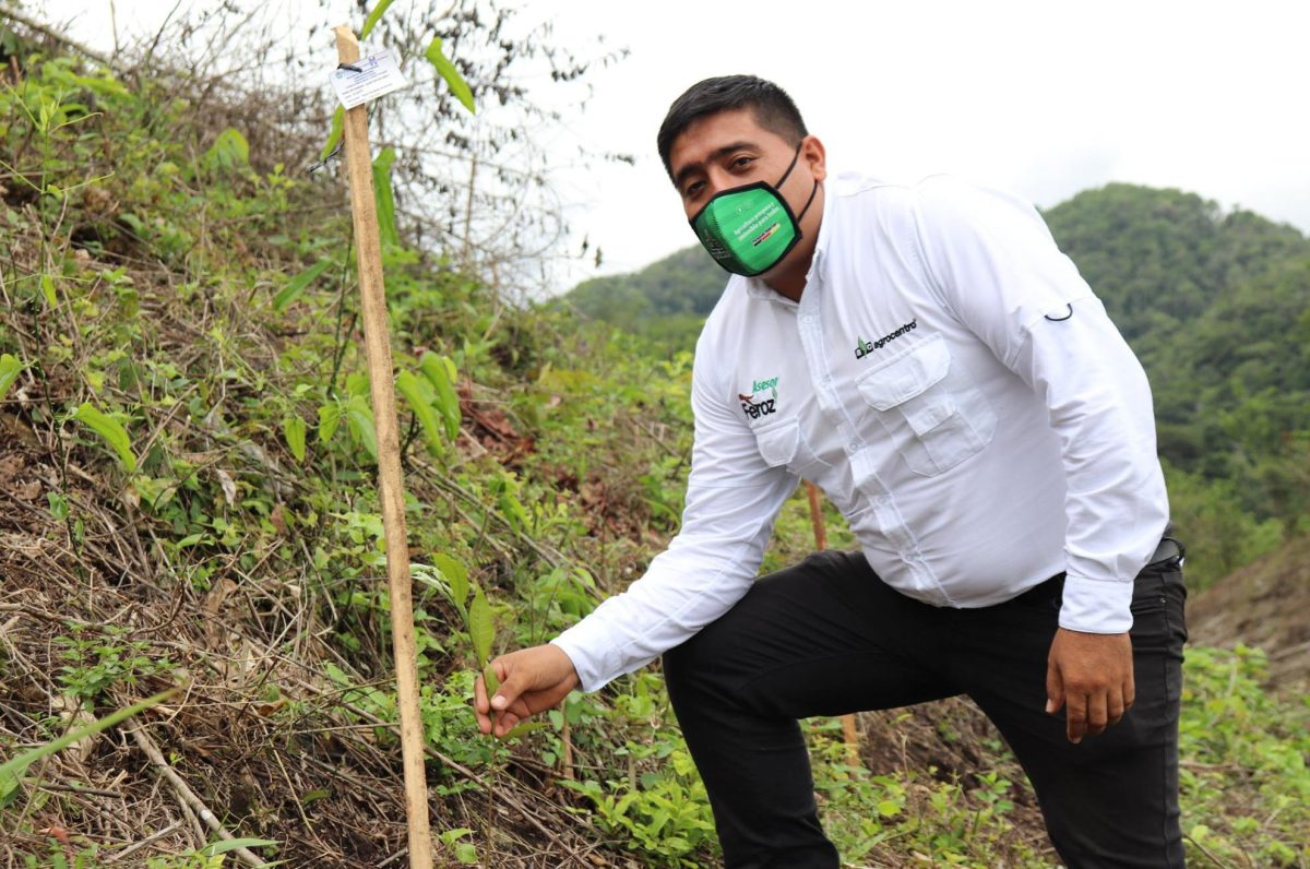 Organización busca reforestar para propiciar la lluvia