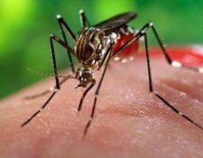 El producto ya fue utilizado en piel sintética y fue efectivo para eliminar el coronavirus. (Foto HemerotecaPL)