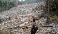 Al menos 28 hectáreas de bosque han sido taladas en los últimos días en el Parque Nacional Laguna Lachuá, en Cobán, Alta Verapaz. (Foto Prensa Libre: Eduardo Sam)