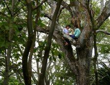 Matilde y Marlene Pimentel Álvarez se trepan a un árbol en la comunidad El Tigre, El Salvador, para conseguir señal de internet y continuar con sus clases virtuales. (Foto Prensa Libre: AFP)