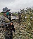 Elementos del Ejército resguardan los restos de la aeronave localizada en Quiché. Fotografía: Ejército de Guatemala.