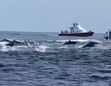 Viajeros captaron las imágenes de un grupo de delfines en aguas del Pacífico este domingo 30 de agosto. (Foto Prensa Libre: Captura Video)