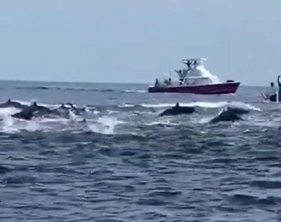 Avistamiento de delfines en el Océano Pacífico impresiona a guatemaltecos