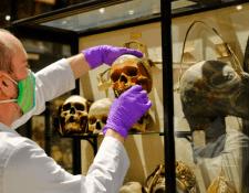 La retirada de los cráneos humanos, muchos de ellos reducidos en tamaño por una práctica de tribus de la cuenca amazónica, se produce por un html5-dom-document-internal-entity1-quot-endproceso de descolonizaciónhtml5-dom-document-internal-entity1-quot-end.