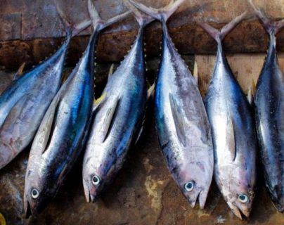 El pescado azul es uno de los alimentos con vitamina D. (Foto: AFP)