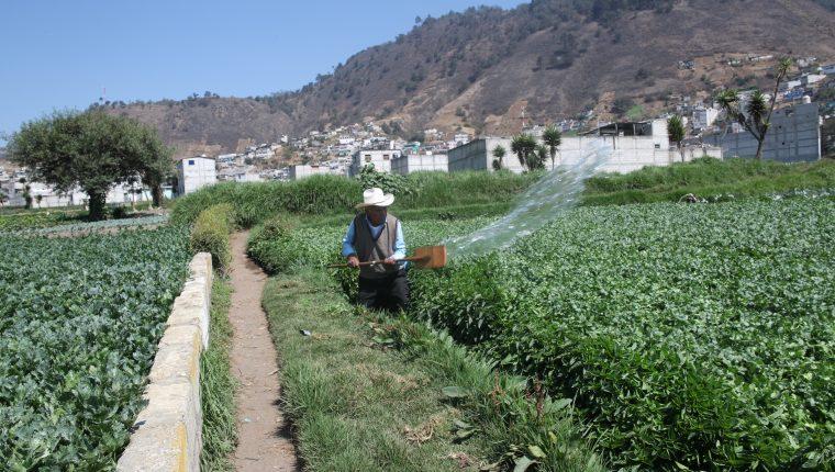 La FAO monitorea precios de alimentos y granos básicos. En Guatemala el maíz y el frijol negro han subido de precio y proyectan que se mantengan altos hasta finales del 2020. (Foto Prensa Libre: Hemeroteca)