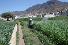 """Ricardo Rapallo, representante FAO: """"Algunos productores acapararon granos durante la pandemia"""""""