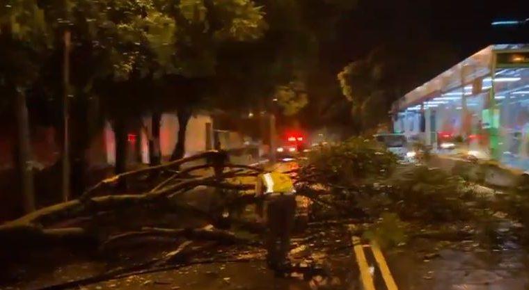 La lluvia derribó un árbol en la zona 13 de la capital. (Foto Prensa Libre: Amílcar Montejo)