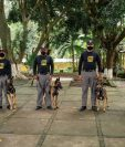 Los agentes caninos junto a sus cuidadores. Foto Prensa Libre: SBS.