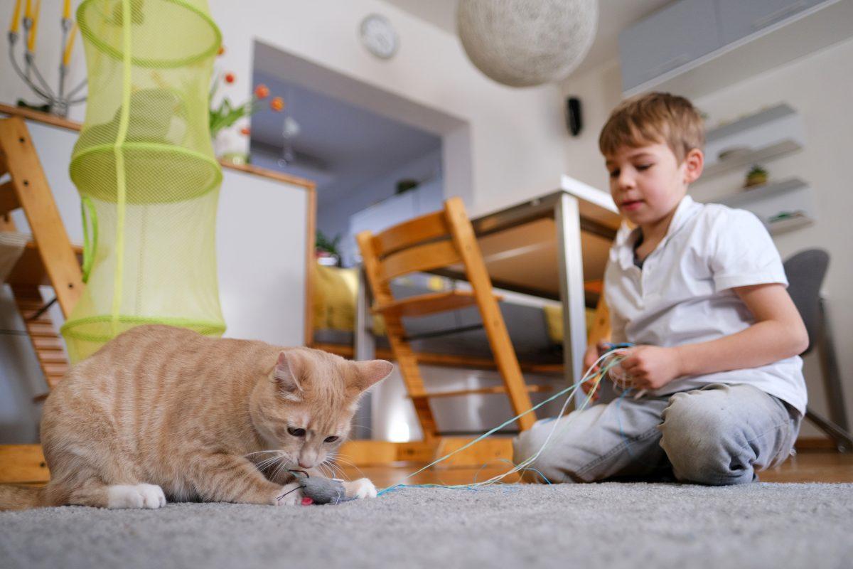 ¿Cómo pueden ayudar los niños en el cuidado de una mascota?