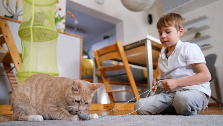 Los gatos son mascotas que se adaptan bien a la vida con niños: cuando quieren estar solos, simplemente se retiran. Foto: DPA