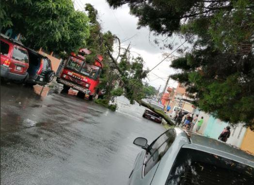 En Mixco un árbol cayó sobre un bus. (Foto Prensa Libre: Conred)