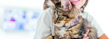 Cuando se tiene una mascota, una buena convivencia con todos los miembros de la familia es ideal para un ambiente tranquilo. (Foto Prensa Libre: Shutterstock).