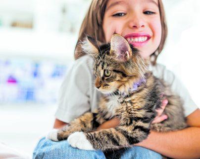 Cómo lograr una buena convivencia entre niños y gatos