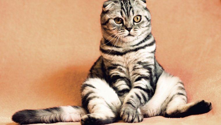 Cuando un gato se sienta y mira hacia el horizonte por mucho tiempo, podría ser un síntoma de que su salud no está bien. (Foto Prensa Libre: Pixabay).