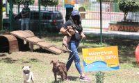 La municipalidad de Mixco constuyo un parque para perros en el bulevar San Cristobal donde las personas pueden llevar a jugar sus mascotas,  Fotograf'a. Erick Avila:        20092020