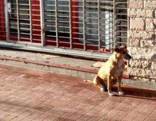 Bianca espera por Eugenia en el espacio donde se reunían en Argentina. (Foto Prensa Libre:  @NIrrutia)