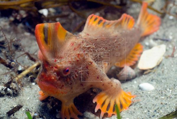 Científicos identifican al menos 11 especies de peces capaces de caminar