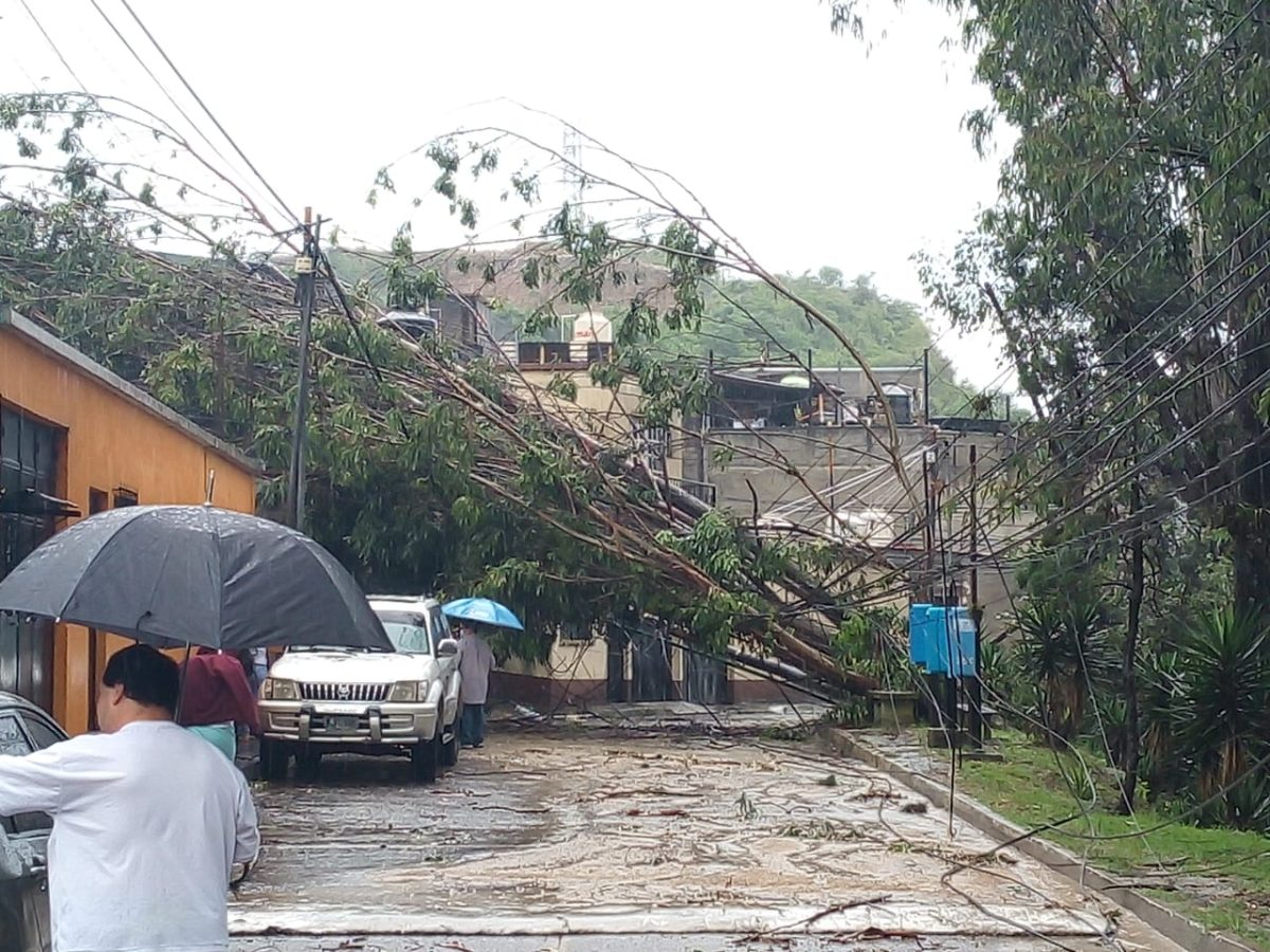 Árboles y postes caídos por la fuerte lluvia de este 15 de septiembre