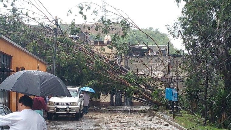 Las fuertes lluvias de esta tarde, y la saturación del suelo generan la caída  de un árbol sobre una vivienda no causó daños. (Foto Prensa Libre: Conred)