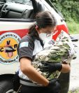 El 13 de septiembre una bebé fue encontrada en la orilla de la carretera en Villa Canales. (Foto Prensa Libre: Bomberos Voluntarios)