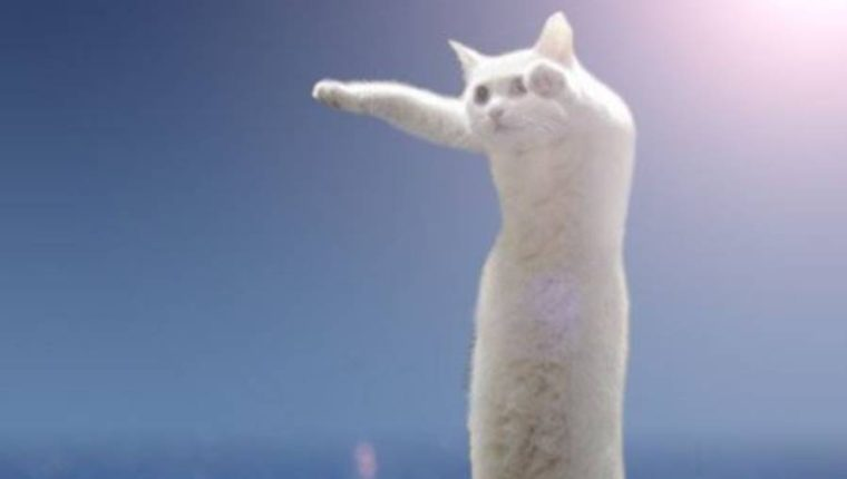 """Nobiko, el """"gato largo"""", destacó en las redes sociales. (Foto Prensa Libre: twitter.com/miyabi_2222)"""