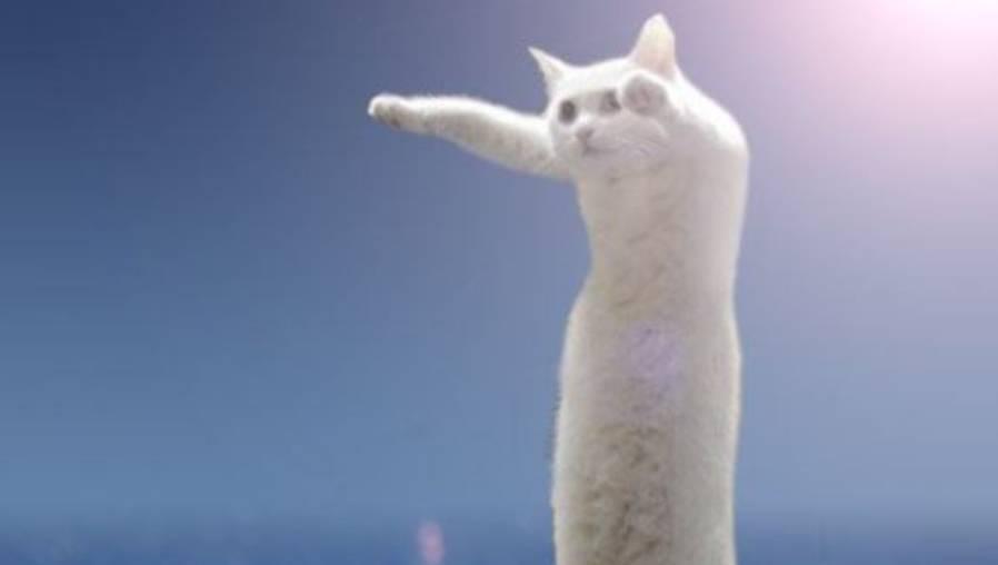"""Muere Nobiko, el famoso """"gato largo"""" de las redes sociales"""