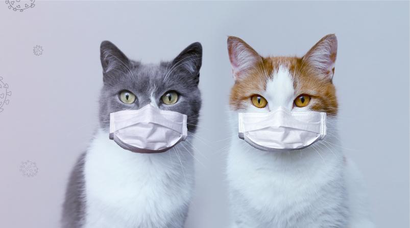 El gato con gotas: aprendiendo de los veterinarios en la lucha contra COVID-19