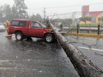 Un árbol cayó sobre un vehículo que transitaba por el Anillo Periférico. (Foto, Prensa Libre: Conred).