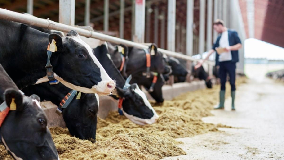 Coronavirus: Sector ganadero reportó baja de un 50% en ventas durante cuarentena