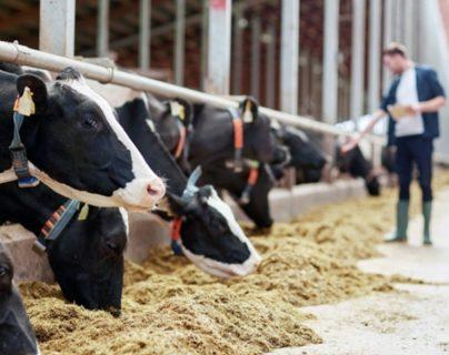 En el último reporte de precios del Ministerio de Agricultura, Ganadería y Alimentación la libra de carne bovina en canal se cotiza en Q14.50. (Foto Prensa Libre: Shutterstock)
