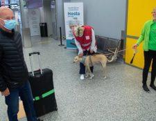 A los pasajeros que llegan a Finlandia se les pide que se froten con un papel para que el perro lo olfatee.