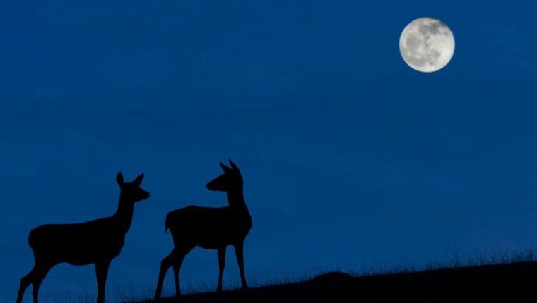 """El mejor momento para ver la """"Luna azul"""" será cuando la noche del 31 de octubre sea más oscura y el cielo esté despejado."""