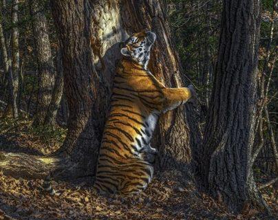 """La imagen ganadora de Sergey Gorshkov se llama """"El abrazo"""". SERGEY GORSHKOV/WPY2020"""