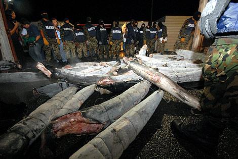"""Así traficaba """"El Chapo"""" Guzmán cocaína en tiburones congelados"""