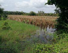 Plantaciones de maíz y frijol fueron afectadas por el paso de la depresión tropical Nana en septiembre pasado en Huehuetenango, Alta Verapaz e Izabal. (Foto Prensa Libre: Conred)